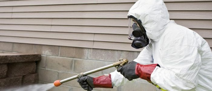 Terms to consider before choosing the pest control service