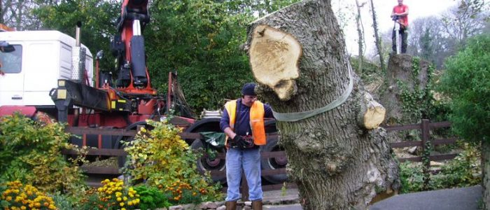 It is Amazing What Tree Survey Can Do For You