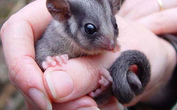 possum removal in Melbourne