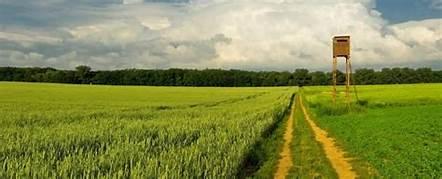 Buying Farmland for Sale