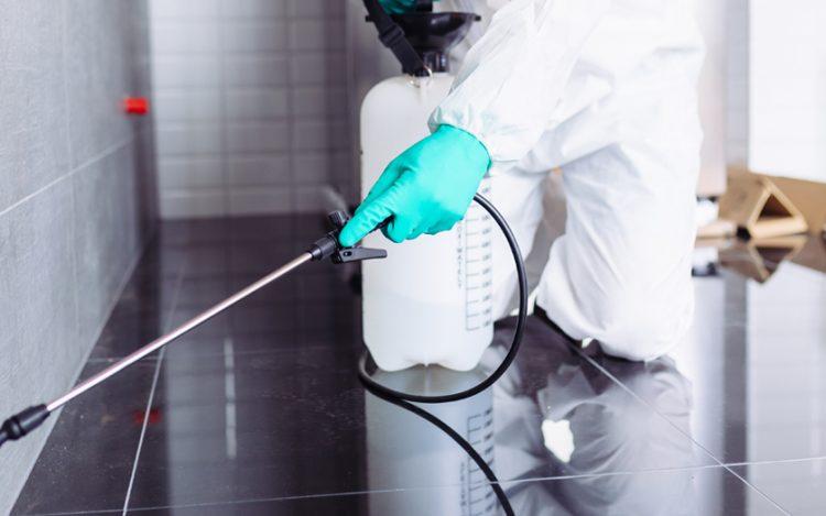 Pest control Services – A Comprehensive Guide